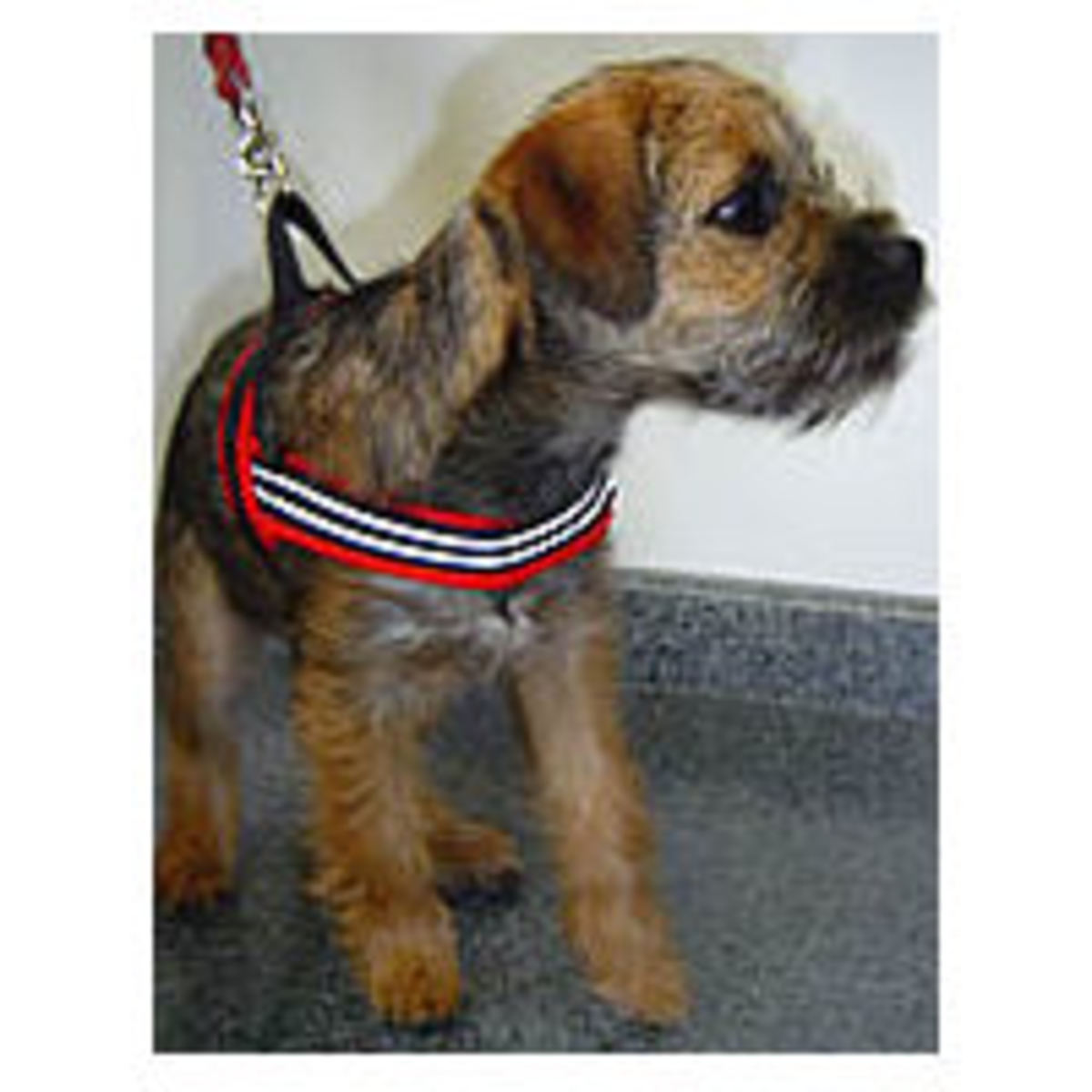 Dog Harnesses - makes and models explained