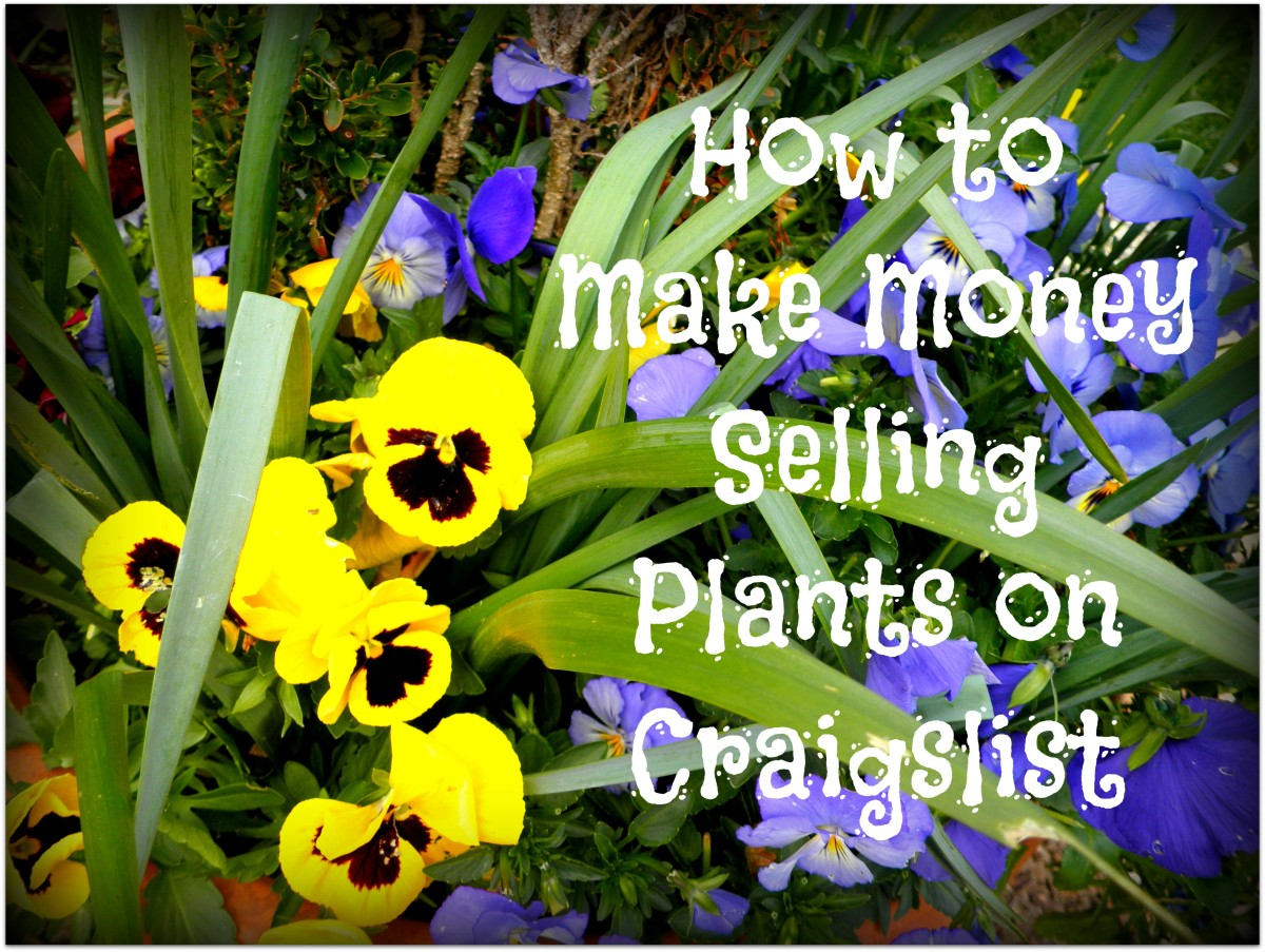Do you have a green thumb? You can make extra money selling plants on Craigslist.