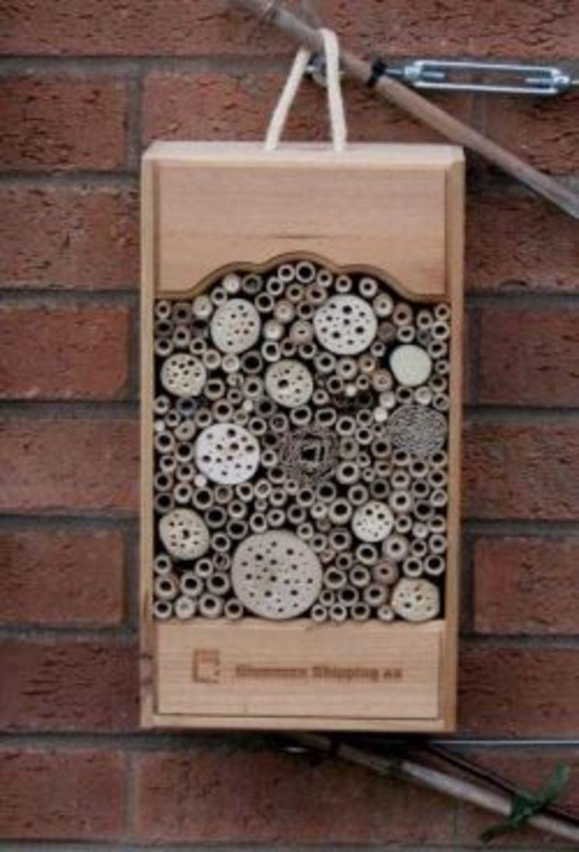 Wine box bug box