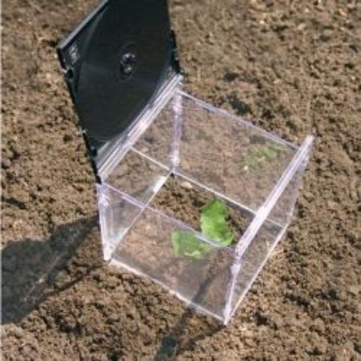 CD Greenhouse