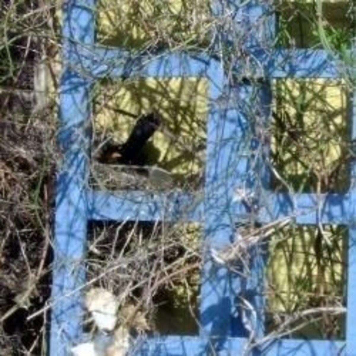 ournestingblackbirds