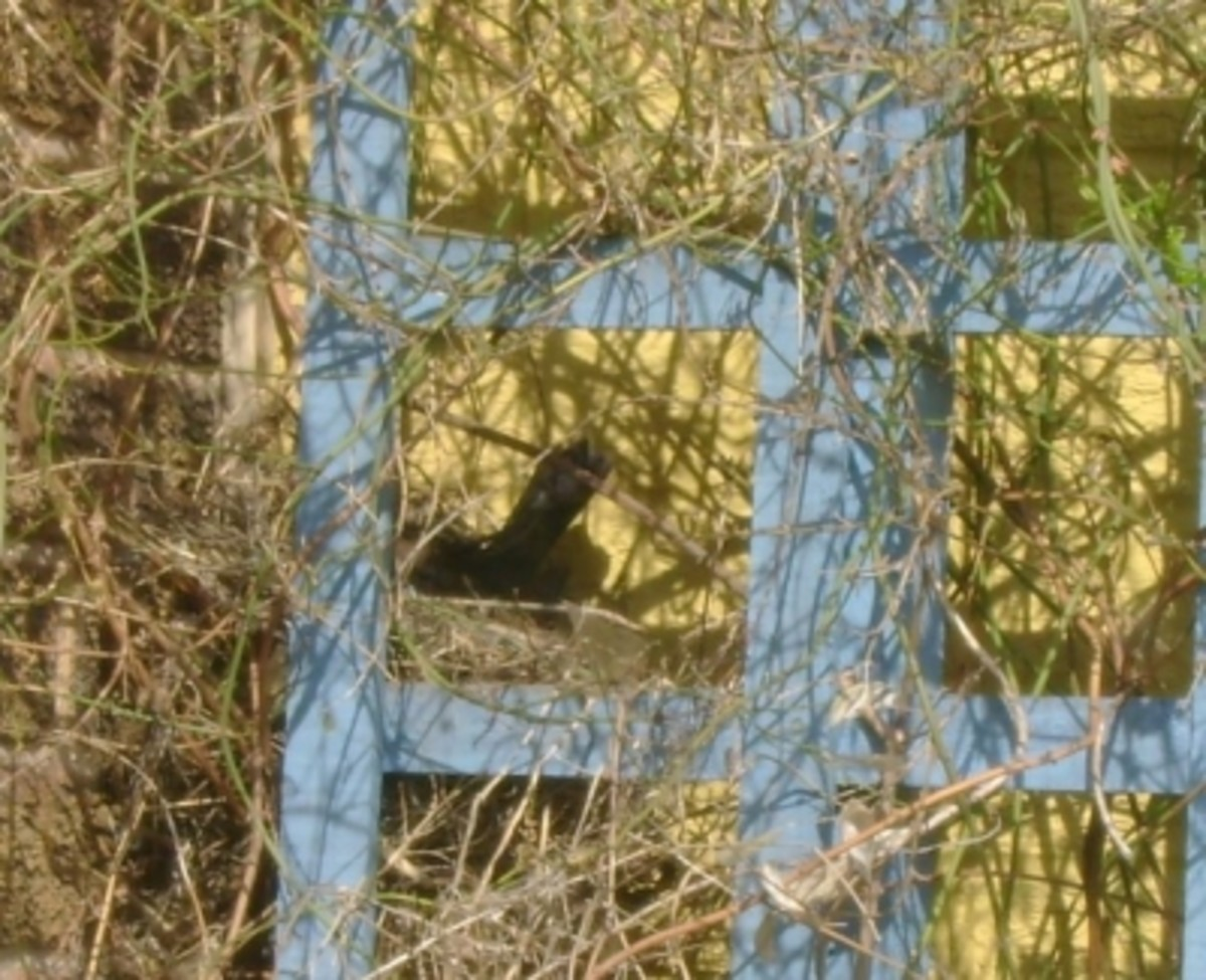 Blackbird Nest in April
