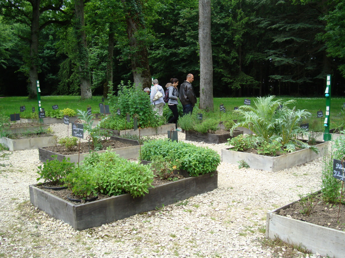 Antonin's garden at the chateau de Valencay with more than 300 Aromatic plants.  The garden is named after Tayllerand's chef, one of the best cooks at that time
