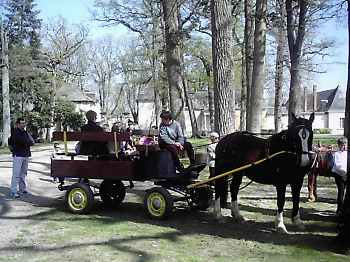 ready for a free ride in a horse and cart carriage?