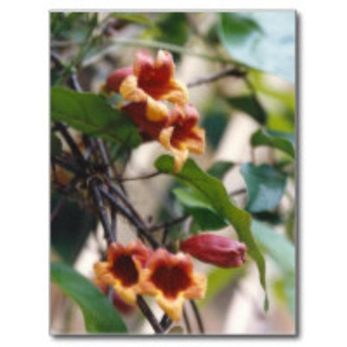 naturally_native_hummingbird_gardening