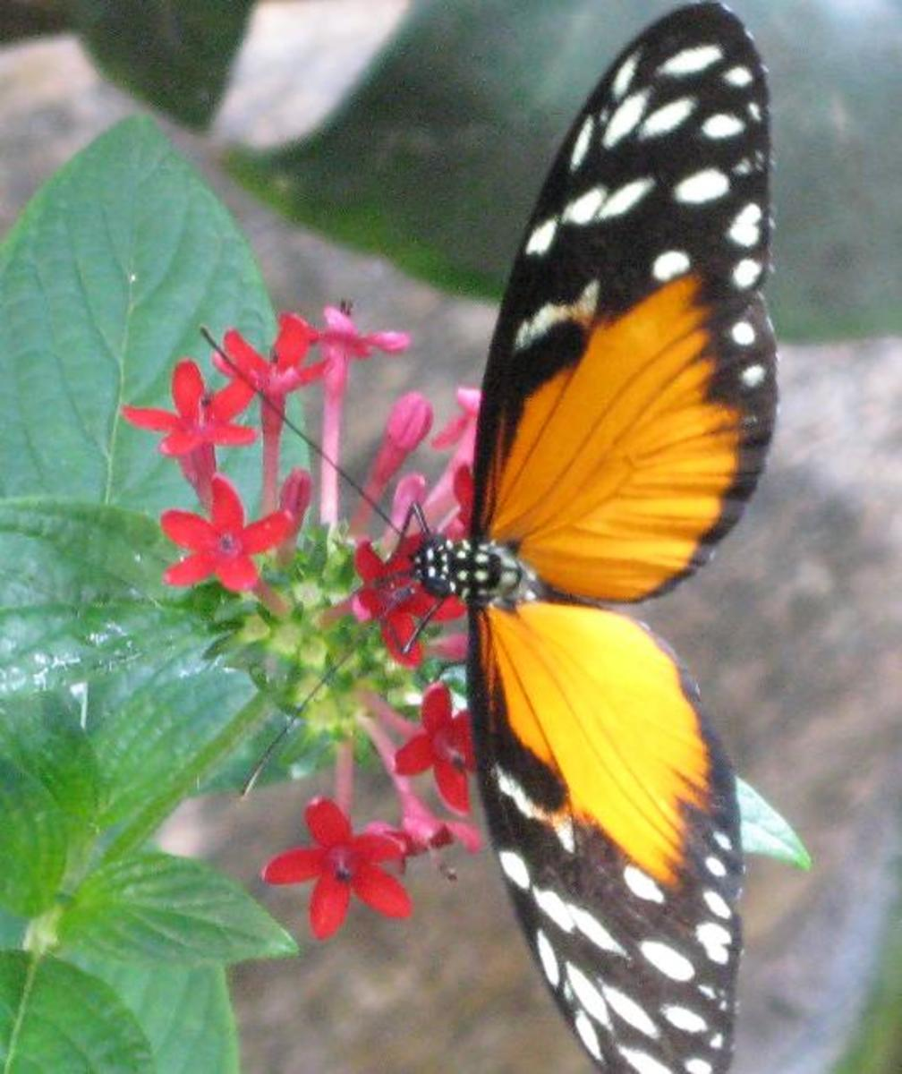 Butterfly Day June 19th