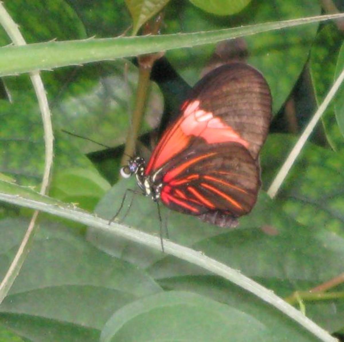 Butterfly resting on a plant stem