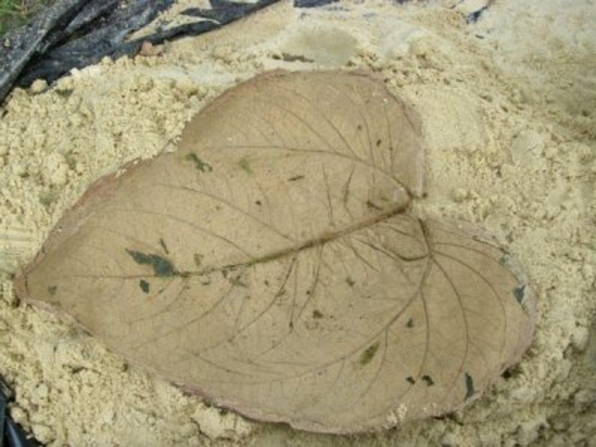 New leaf shaped birdbath made from concrete