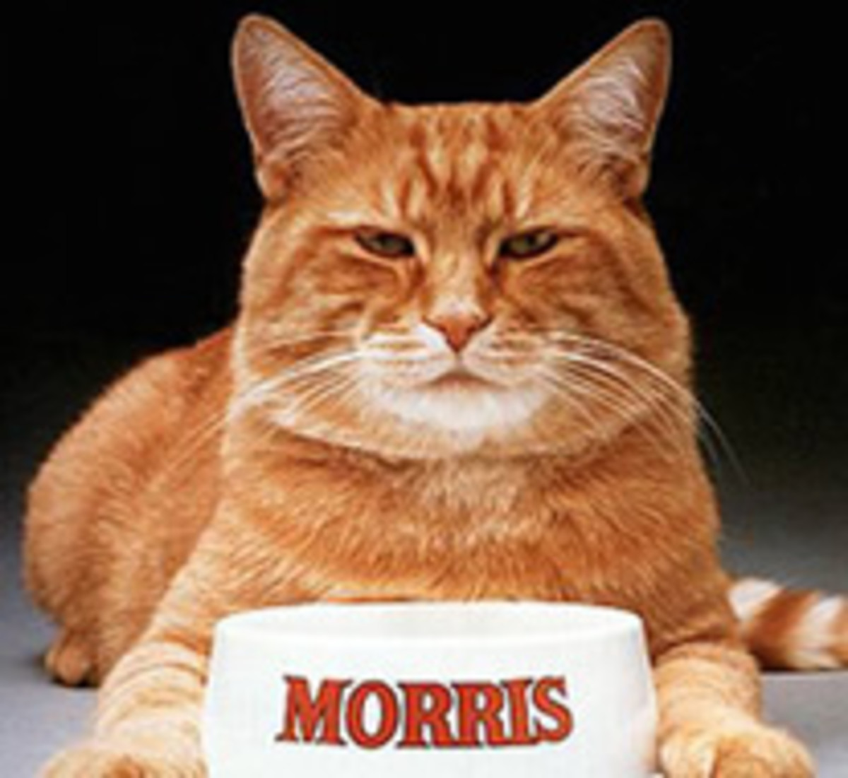 "Morris was also called ""the Clark Gable of Cats"" and in 1983, Time Magazine declared Morris ""The Feline Burt Reynolds"".  Morris has ""authored"" three books: The Morris Approach, The Morris Method, and The Morris Prescription plus Morris was a recipie"