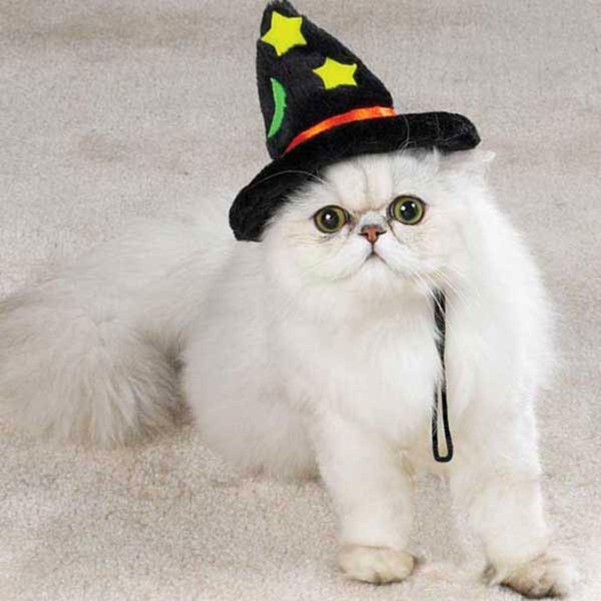 www.cat-alog.com