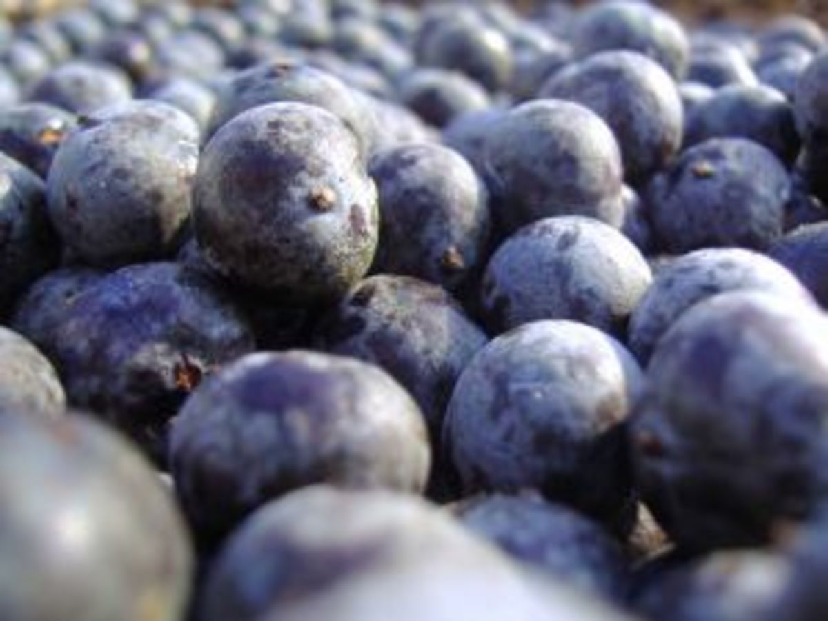 Acai berries from Brazil produce the most popular health drink on the planet: Acai Juice
