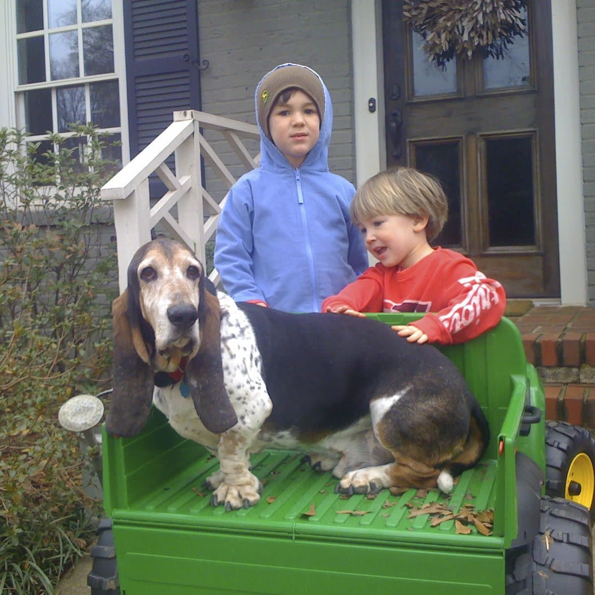 Even a basset hound can fit in a John Deere Gator! Photo by me, Mickie_G