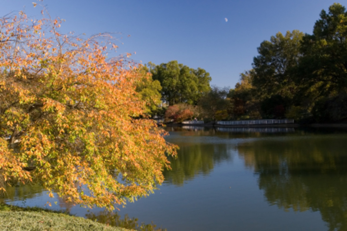 Fall colors in Pullen Park in Raleigh, North Carolina.