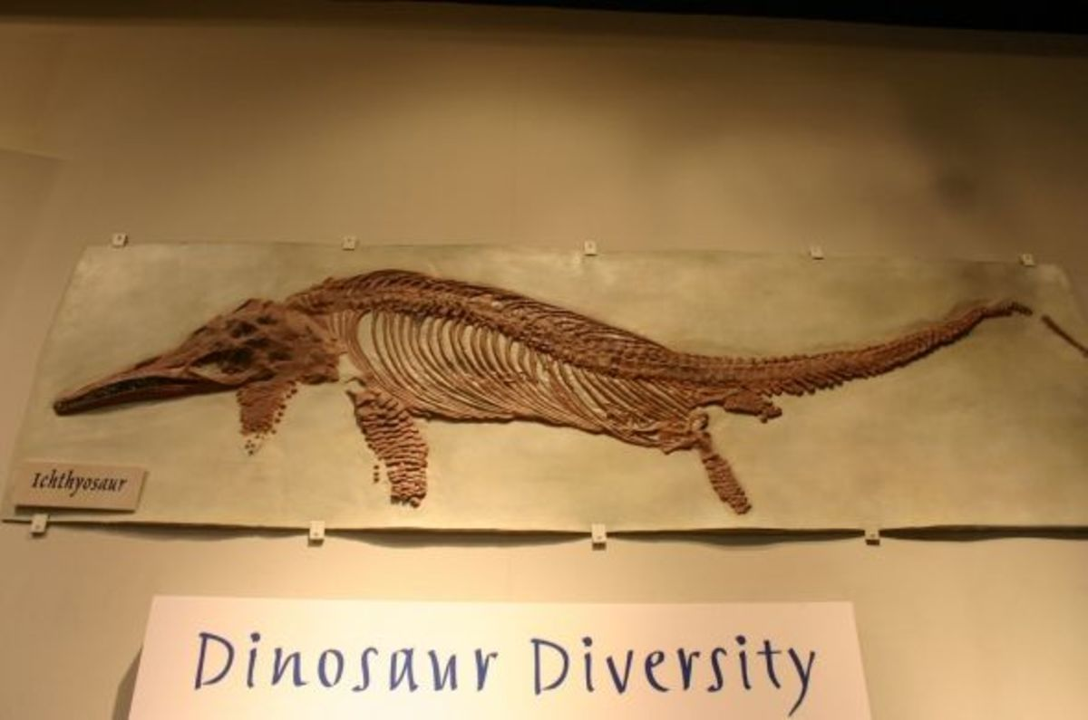 """You can certainly tell why they were called Ichthyosaurs or """"fish lizards"""""""