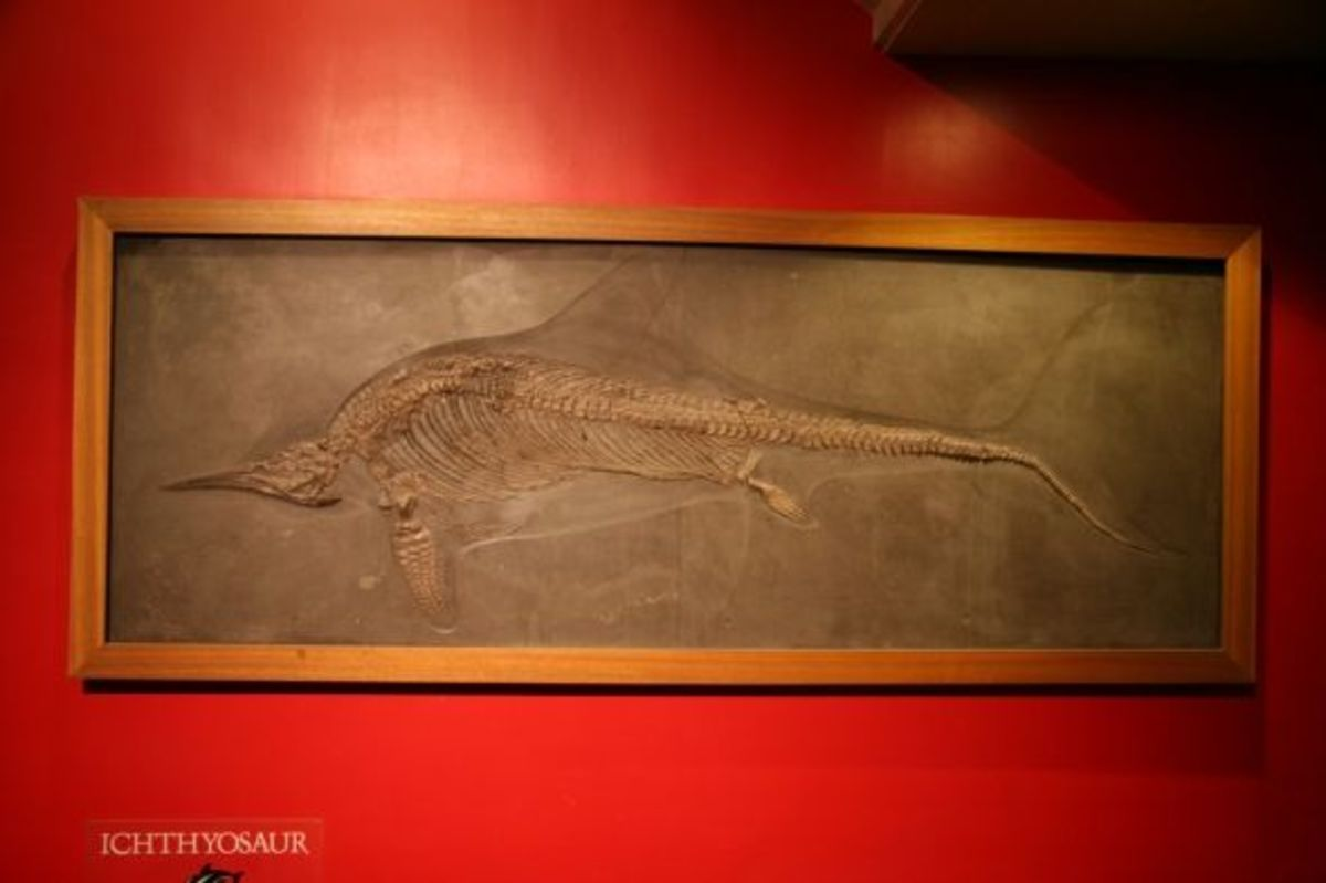 Ichthyosaur at Boston Museum of Science