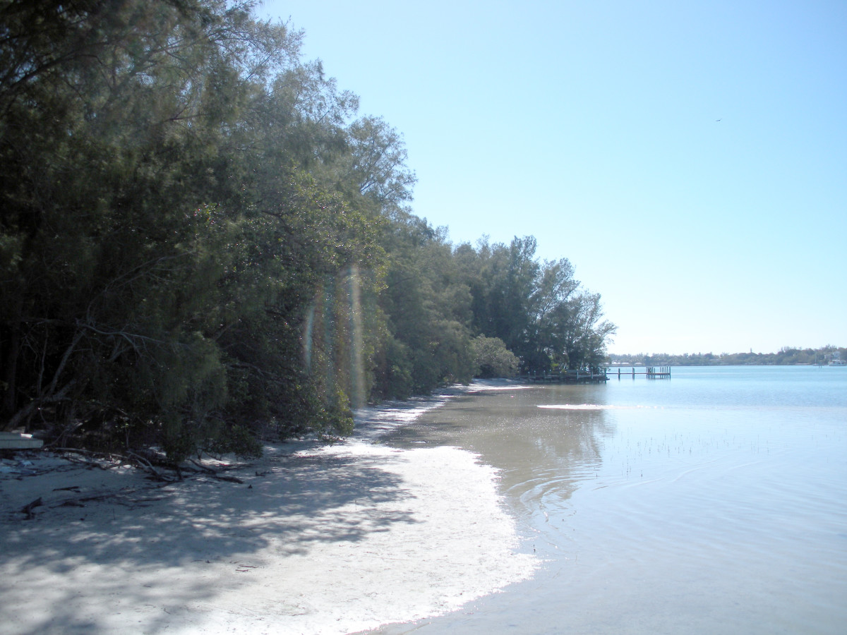 Mangroves and Australian Pines