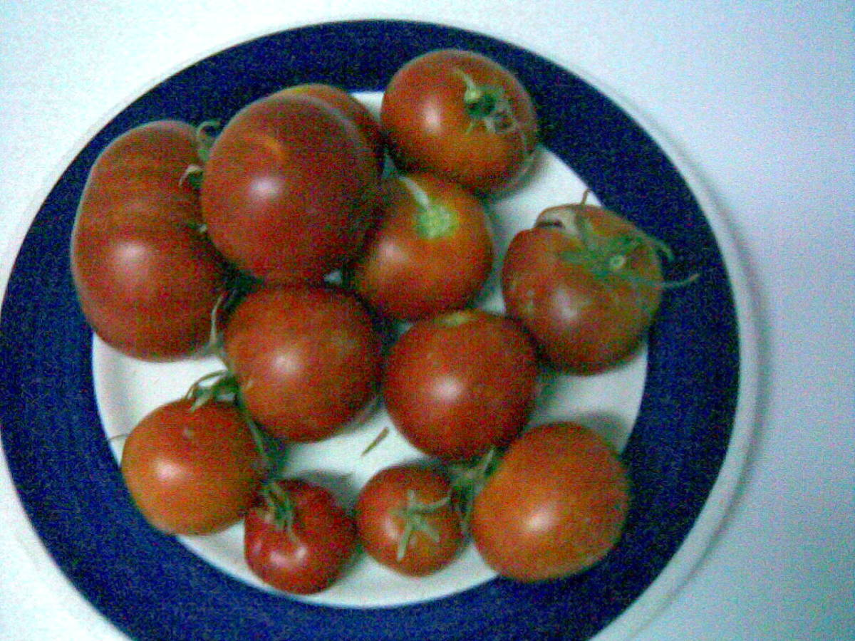OK, you don't need to tell me, this is a crappy shot, taken with the cell AND probably while I was on drugs. It's not from spring, either. So, all in all, one's got to wonder how did it make it to this hub?  Couldn't let the tomatoes pass, I guess! :
