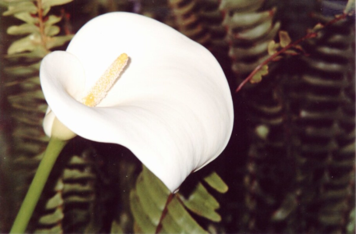 This is NOT a perfect photo... it's a PERFECT flower.