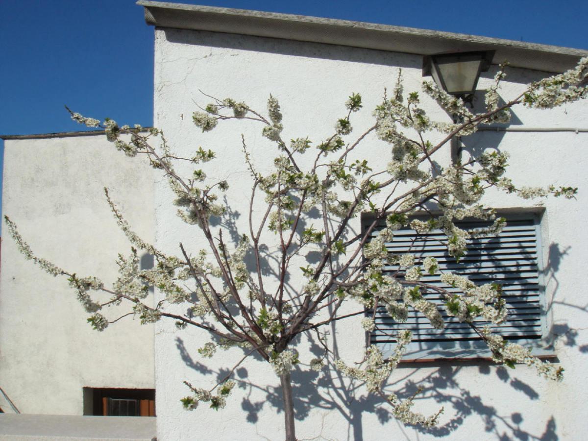 Here's him again.  Pretty plum tree of mine!
