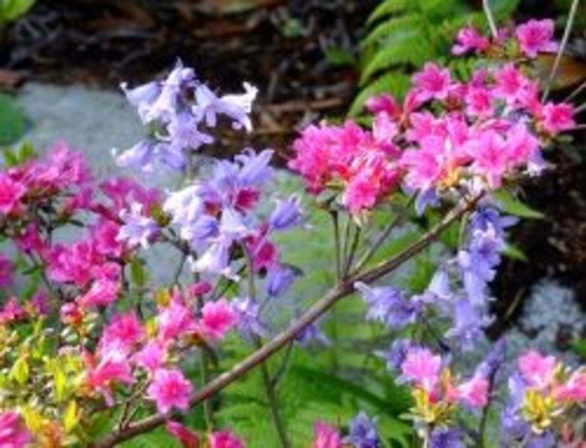 The 10 Best Plants for Your Pacific Northwest Garden