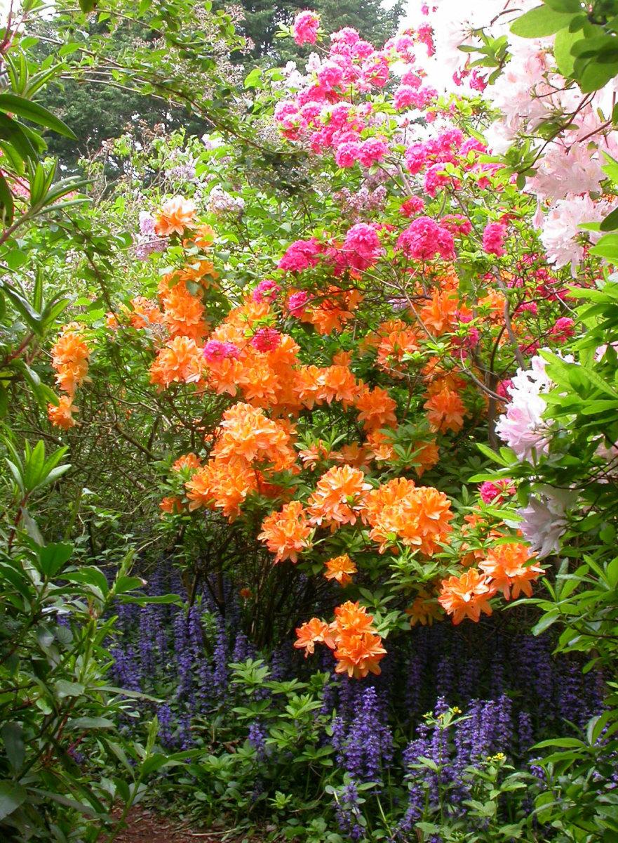 bestgardenplants