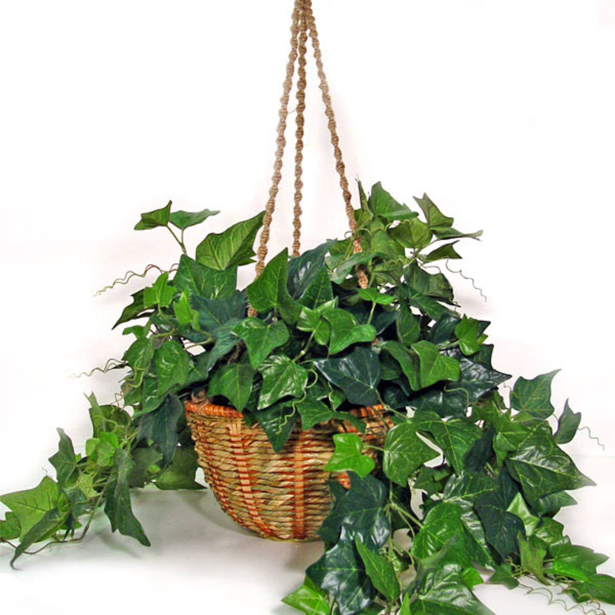 Types of Climbing Plants
