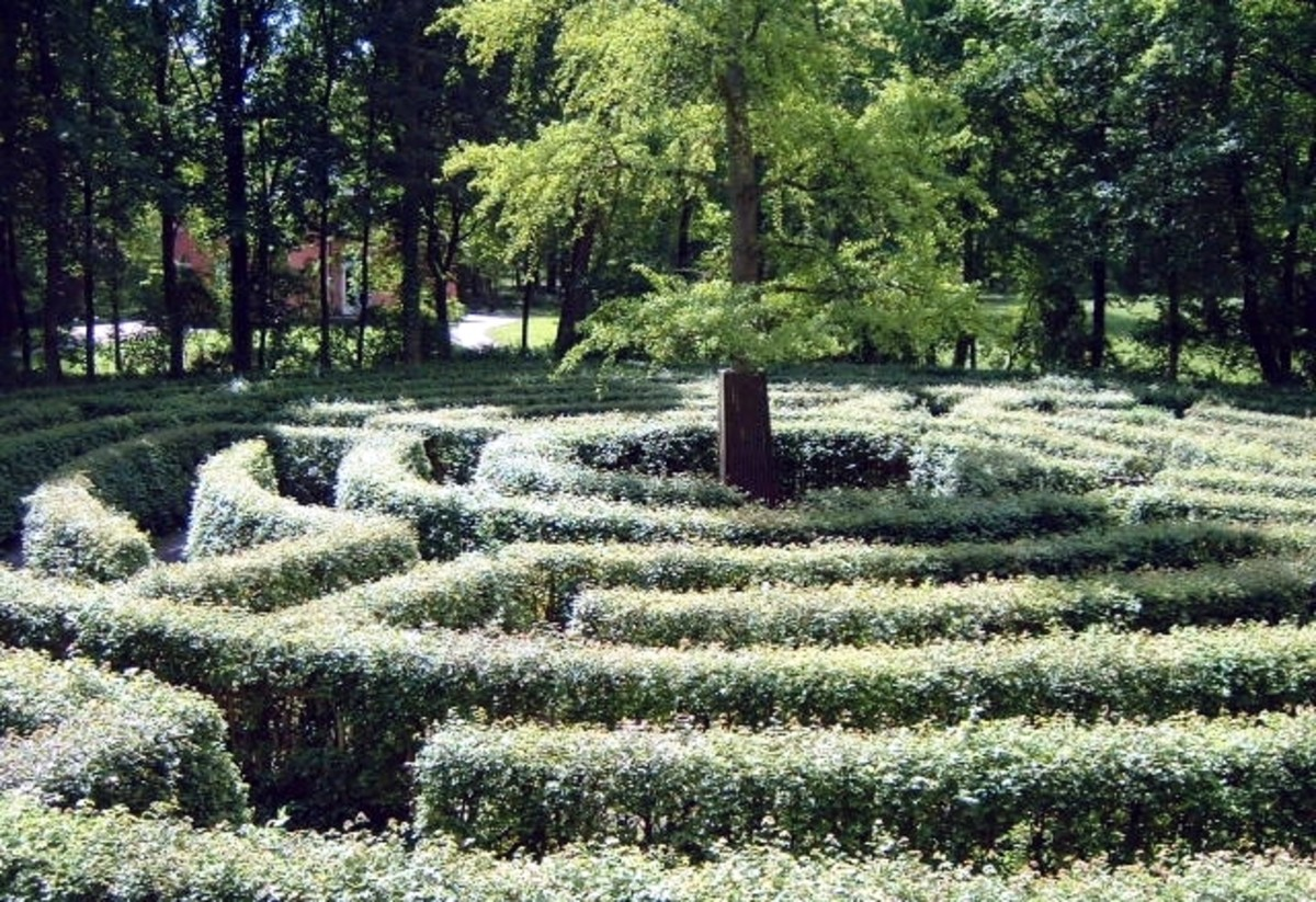 Hedge Labyrinth, Germany