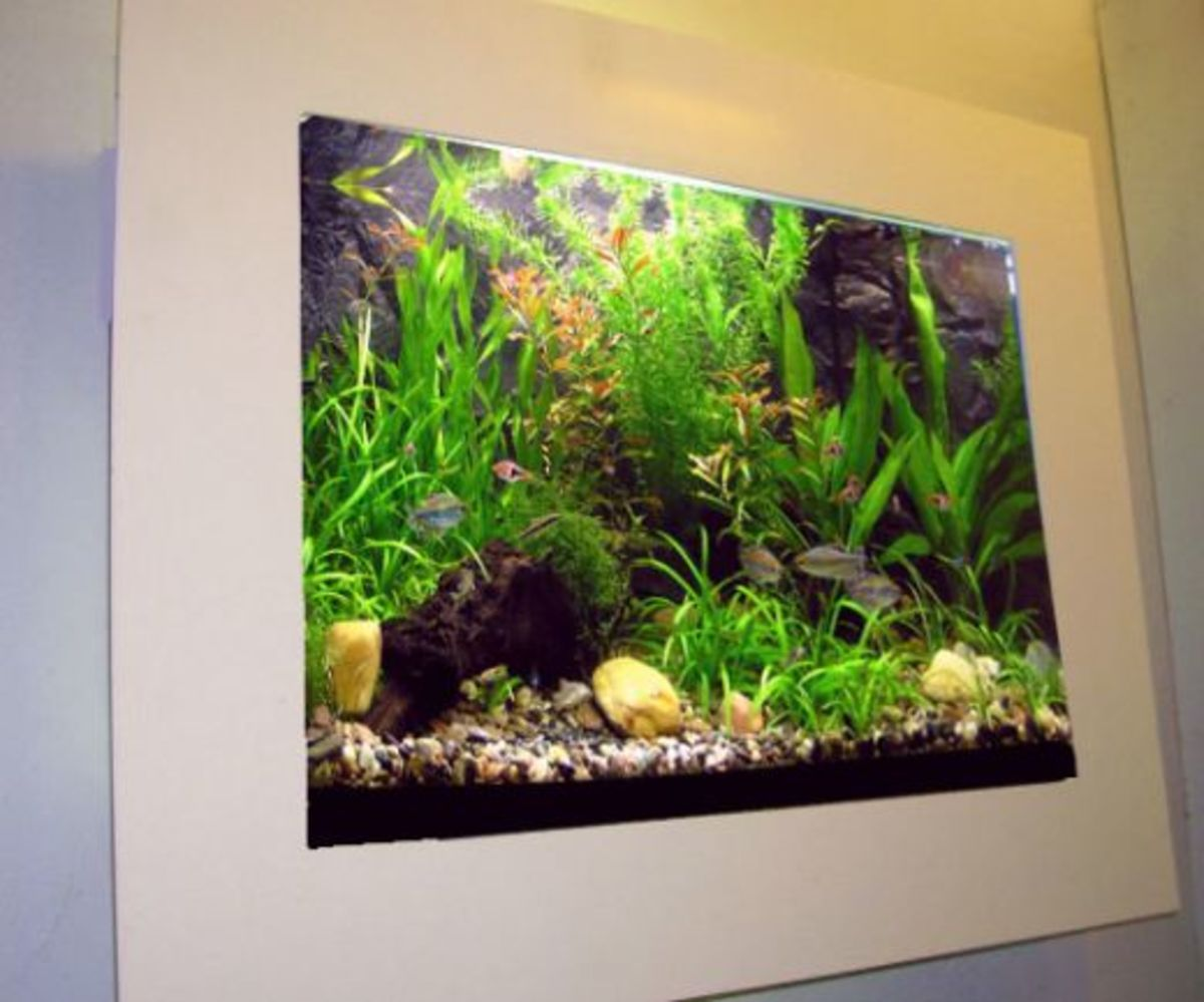 A guide to wall mounted in wall fish tanks for Fish tank in wall