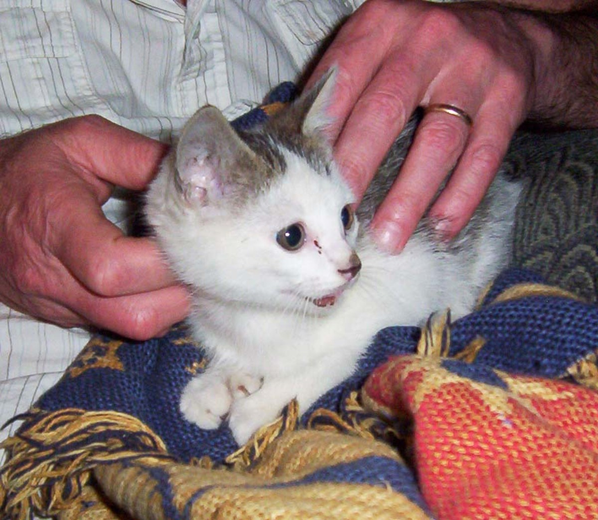 Kittens - Help, I Found a Kitten, What Should I Do