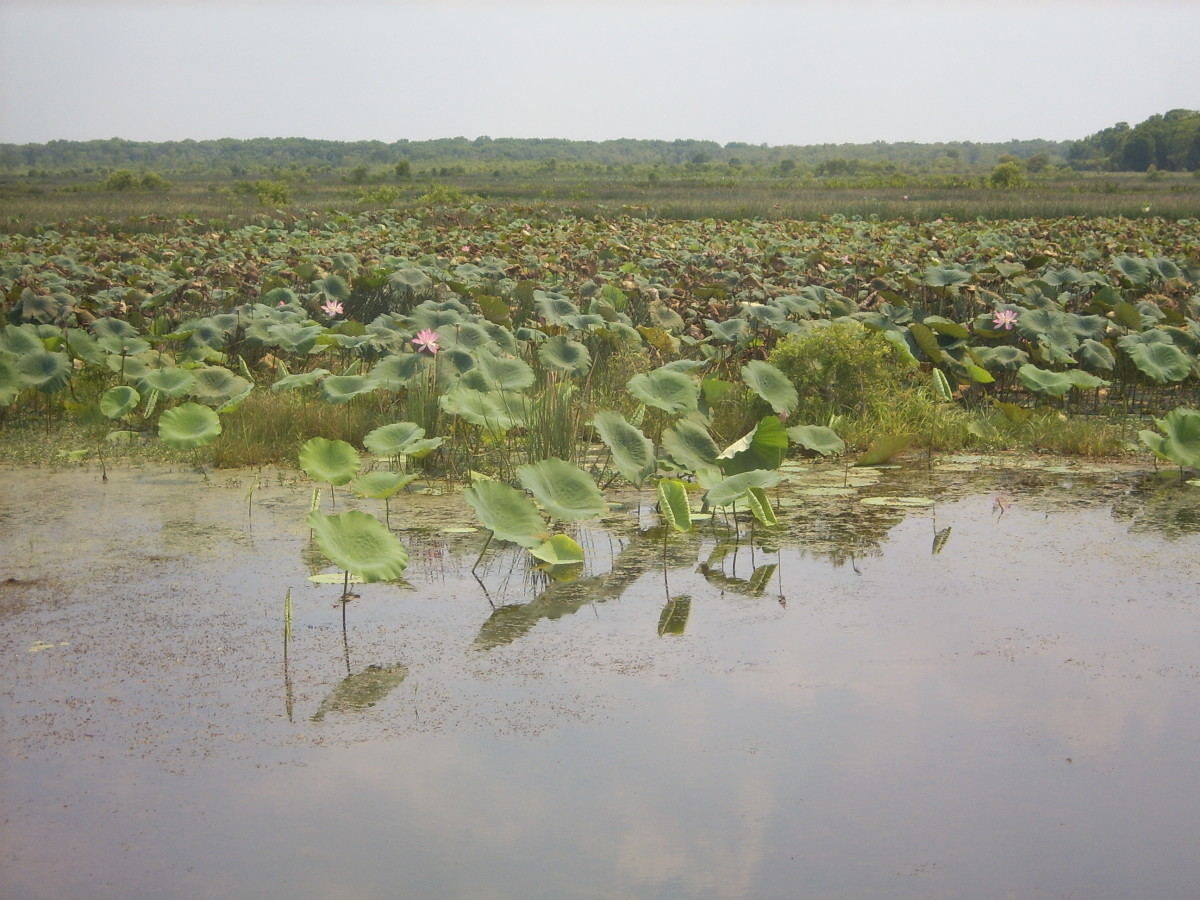 Wetlands near Darwin, Northern Territory