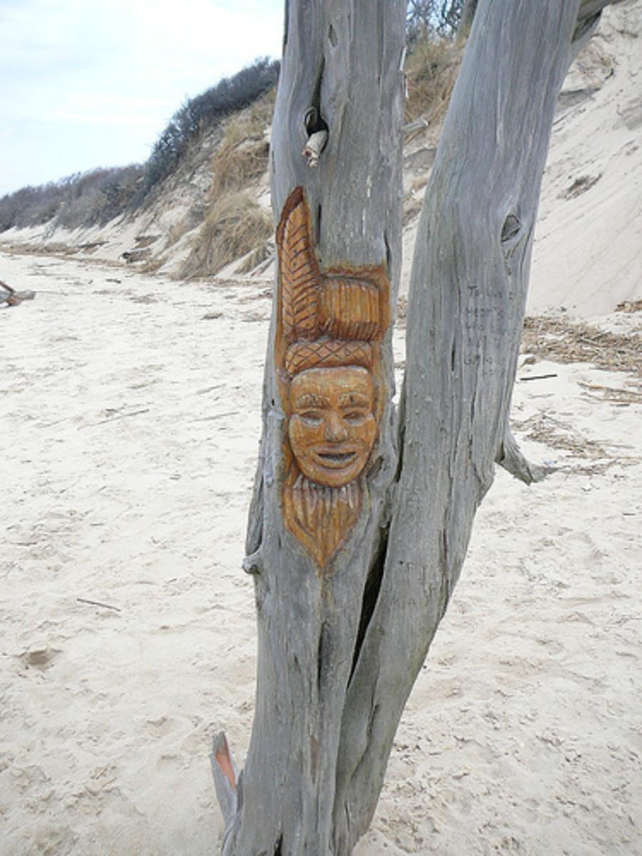 Voodoo Tree - Higbee Beach, Cape May