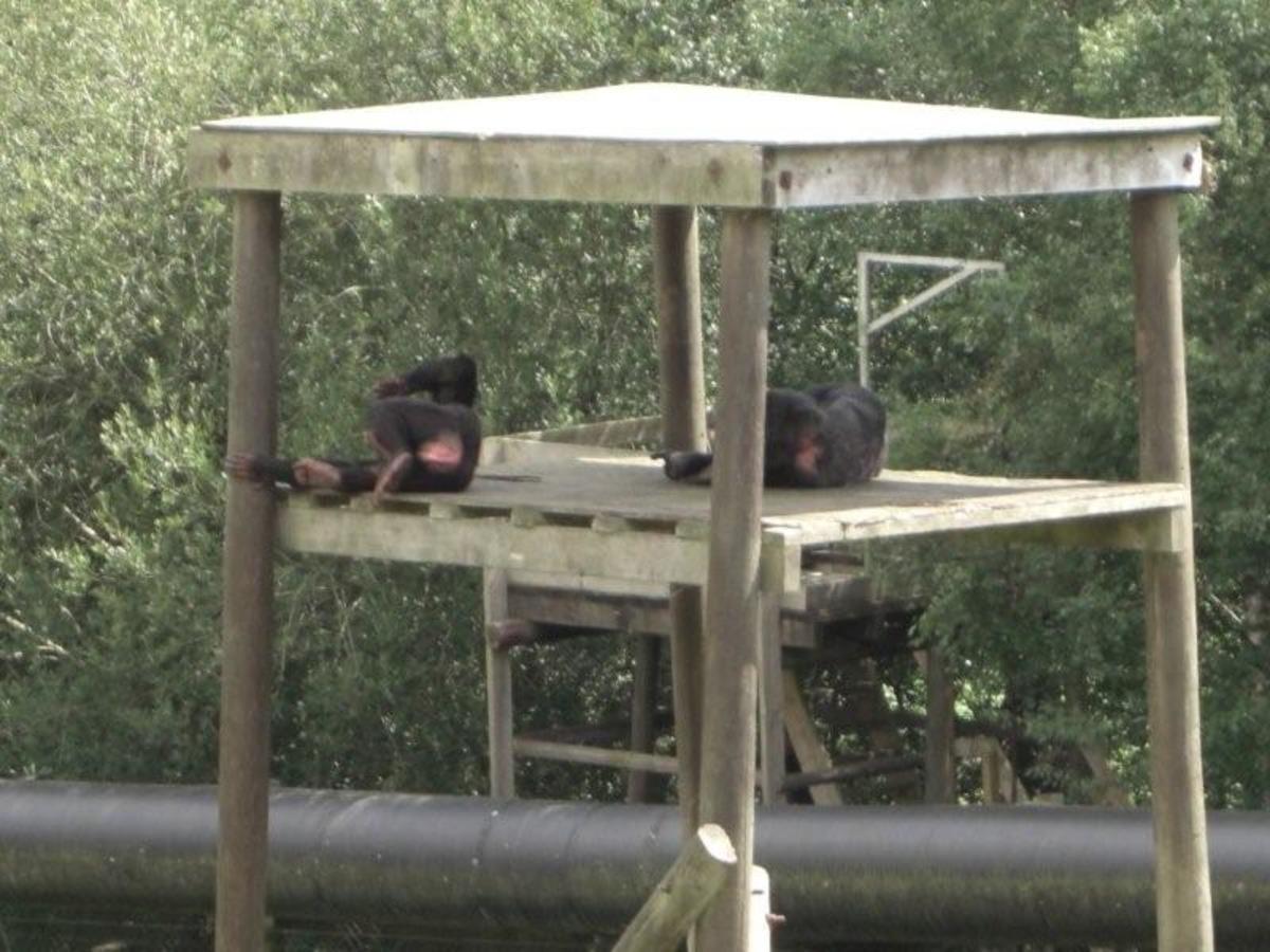 monkey-world-primate-rescue-centre