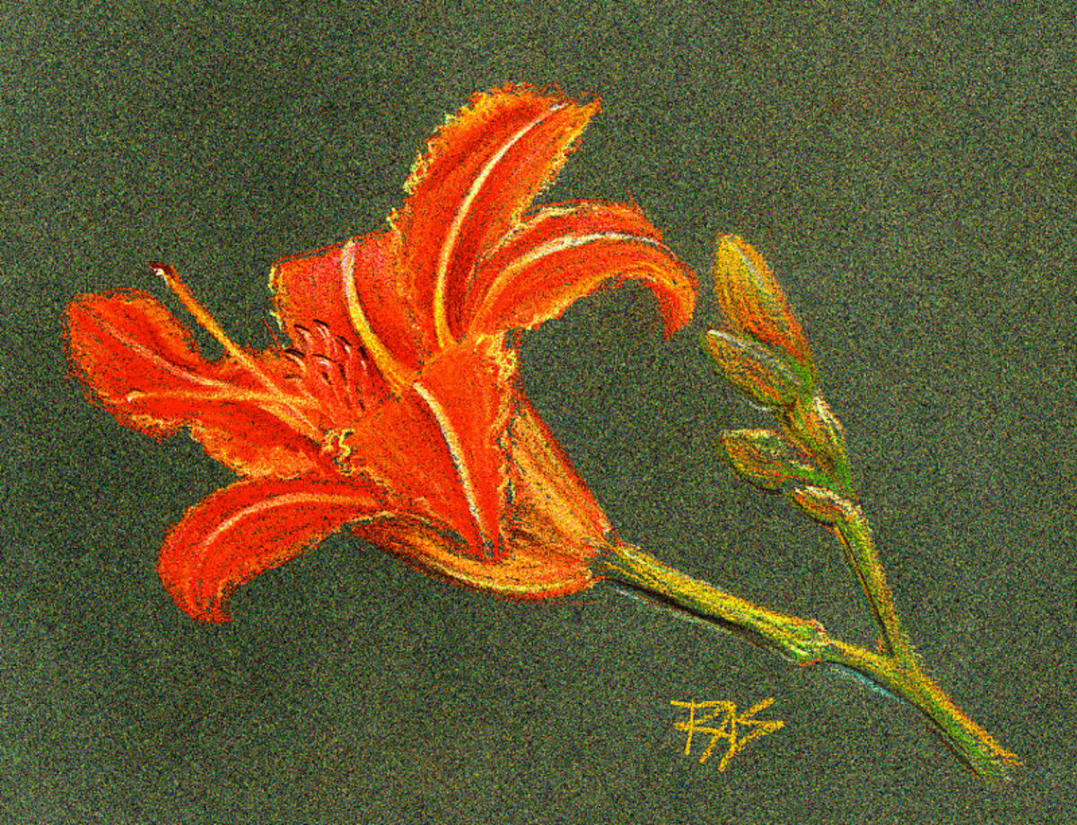 Tiger Lily by Robert A. Sloan, pastel pencil on dark green pastel paper.