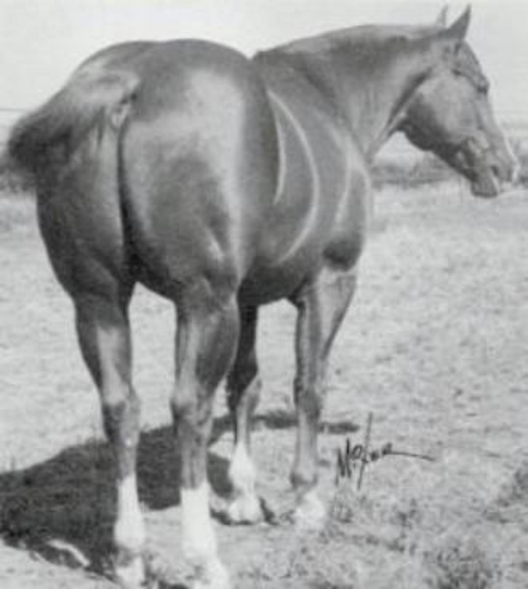 Leo, AQHA hall of fame inductee and leading broodmare sire.  Great broodmare cross with King stallions. All photos are the property of their respective owners and may not be copied or reproduced without the owner's prior permission.