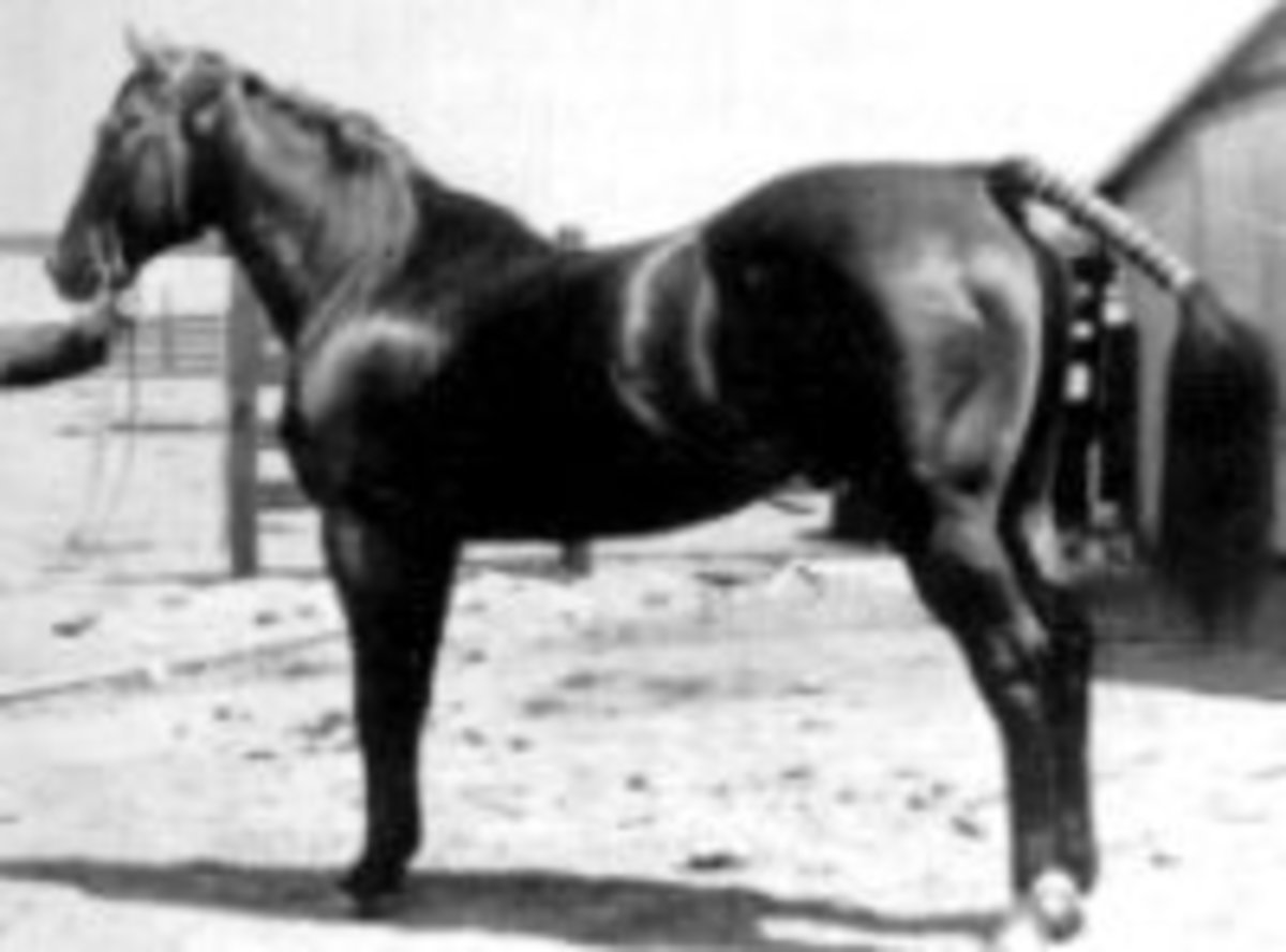 Oklahoma Star, excellent broodmare sire crossed with King or King bred stallions to create athletic, attractive horses.