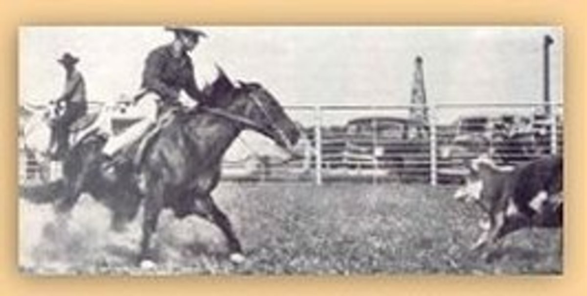 Poco Bueno, one of the well known sons of King that puts cow sense into American Quarter Horses.