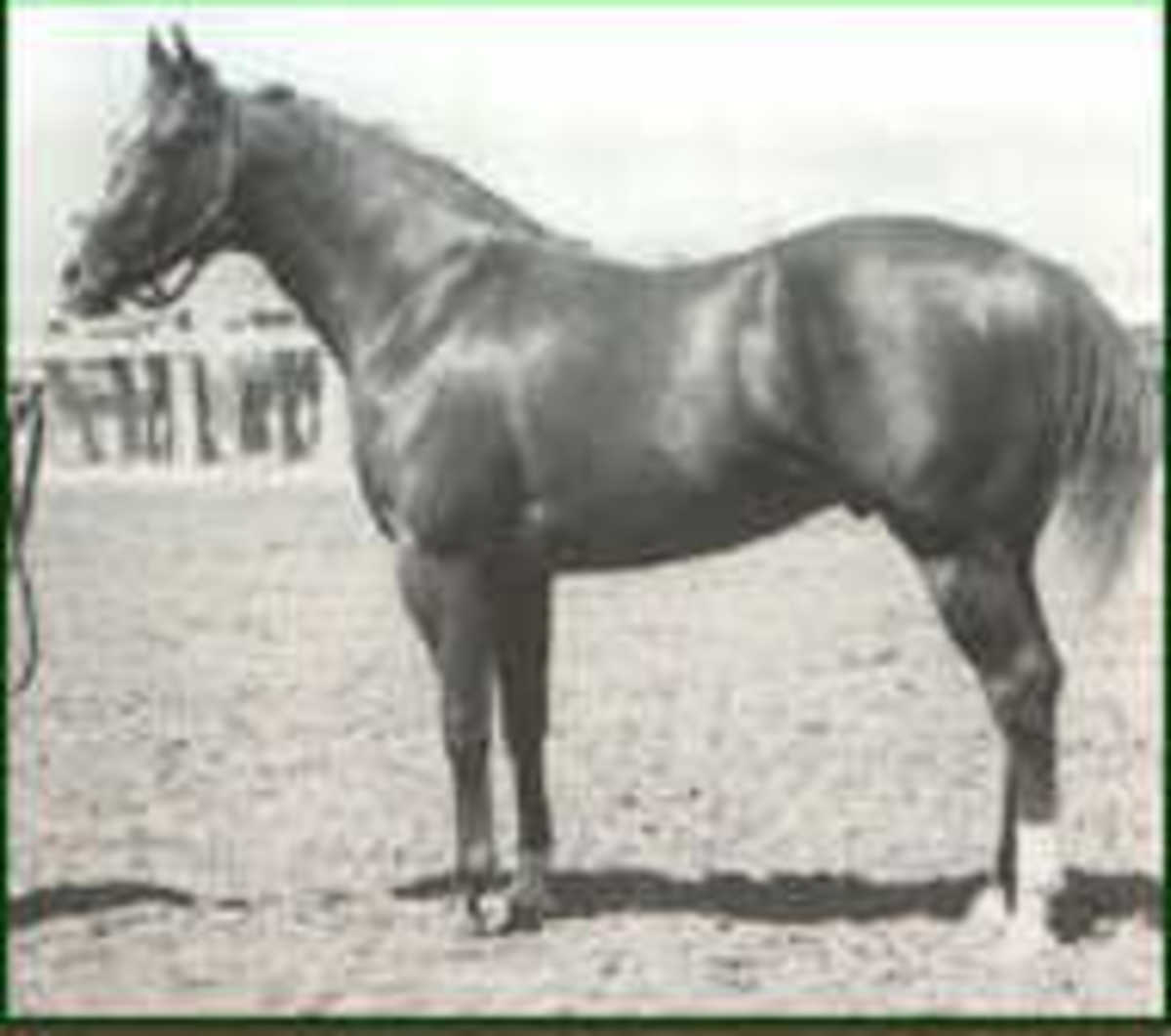Lightning Bar, son of the Three Bars, a common outcross on the foundation Quarter Horse bloodlines, sire of the highly influential 75% foundation Quarter Horse, Doc Bar.