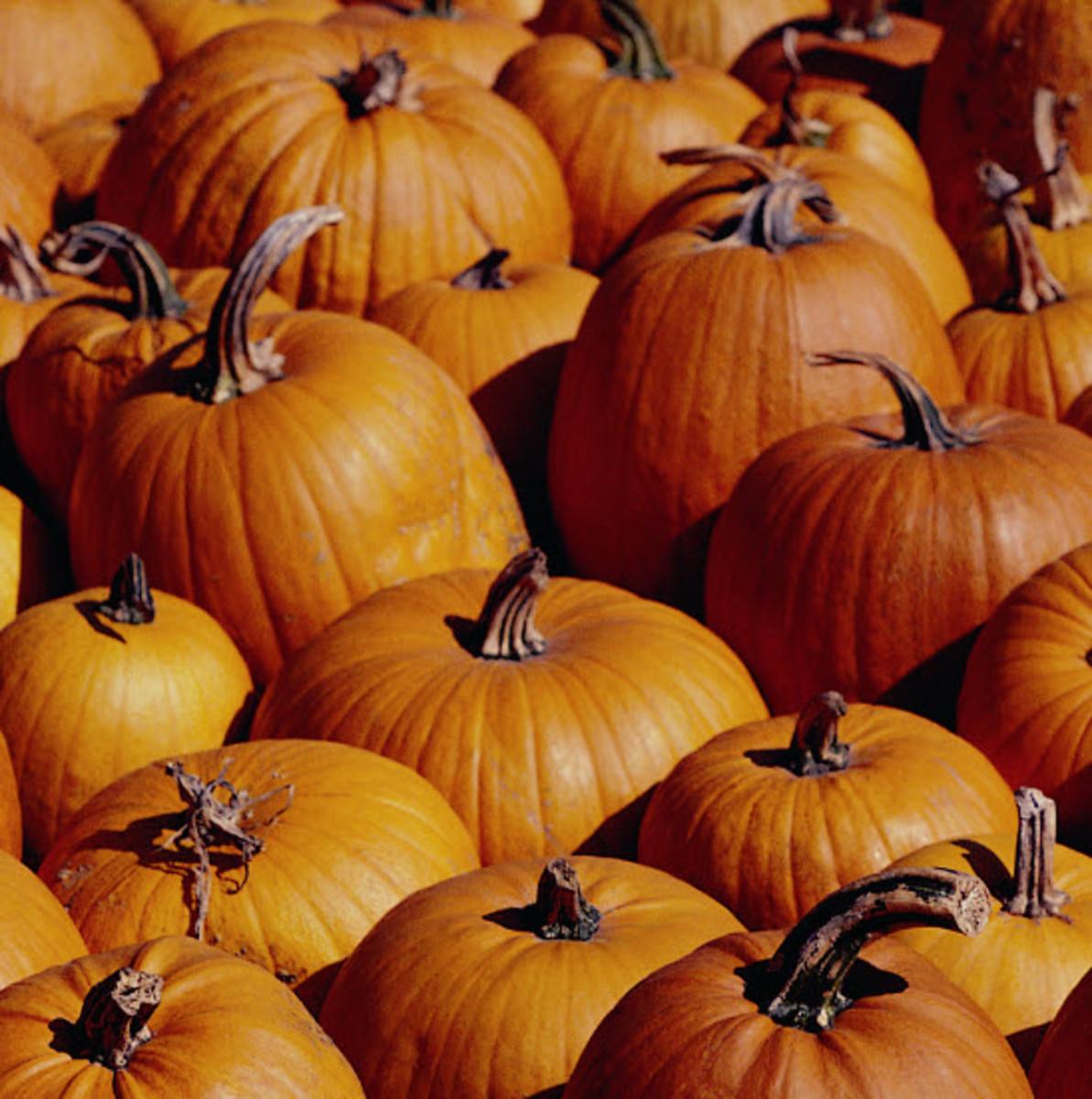autumn-in-new-paltz-new-york