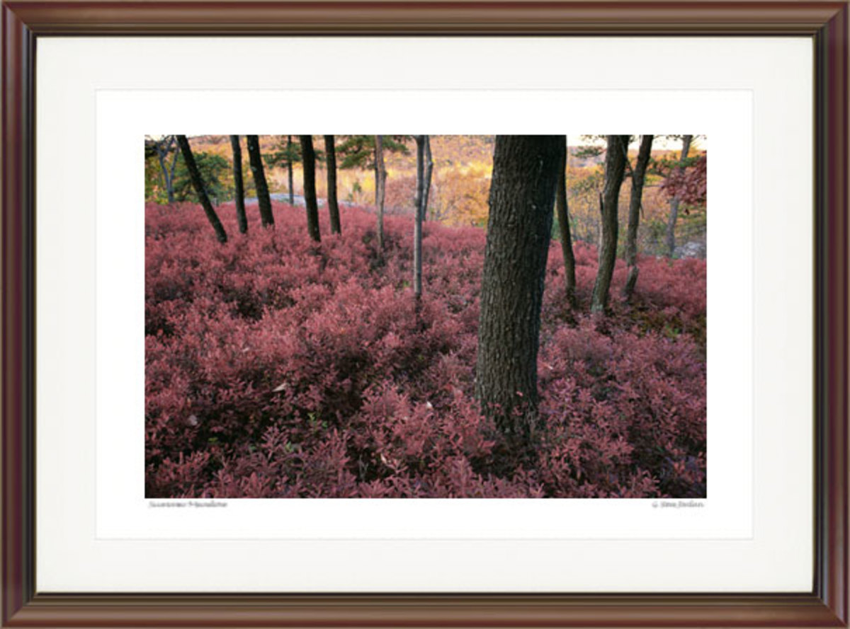 Autumn Blueberry Bushes. Courtesy G. Steve Jordan. Gallery #88.
