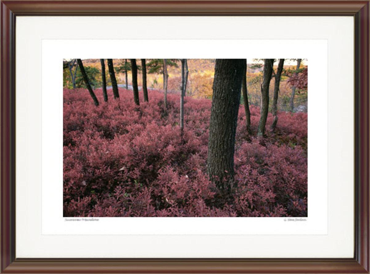 Autumn Blueberry Bushes. Courtesy G. Steve Jordan. Gallery #88.
