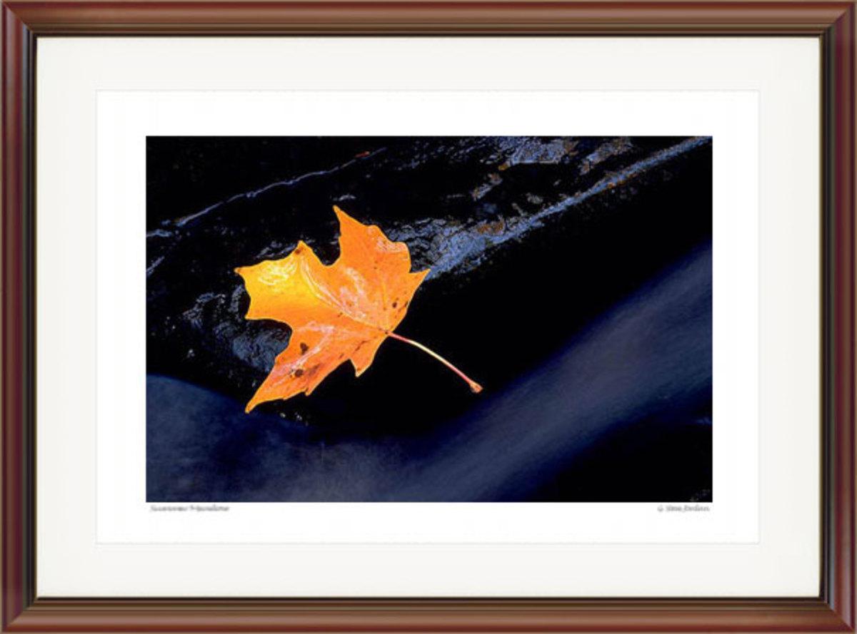 Leaf in Stream. Courtesy G. Steve Jordan. Gallery #29.