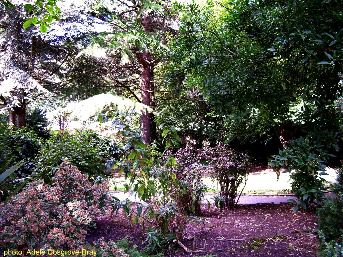 A quiet, leafy haven for squirrels and birds.
