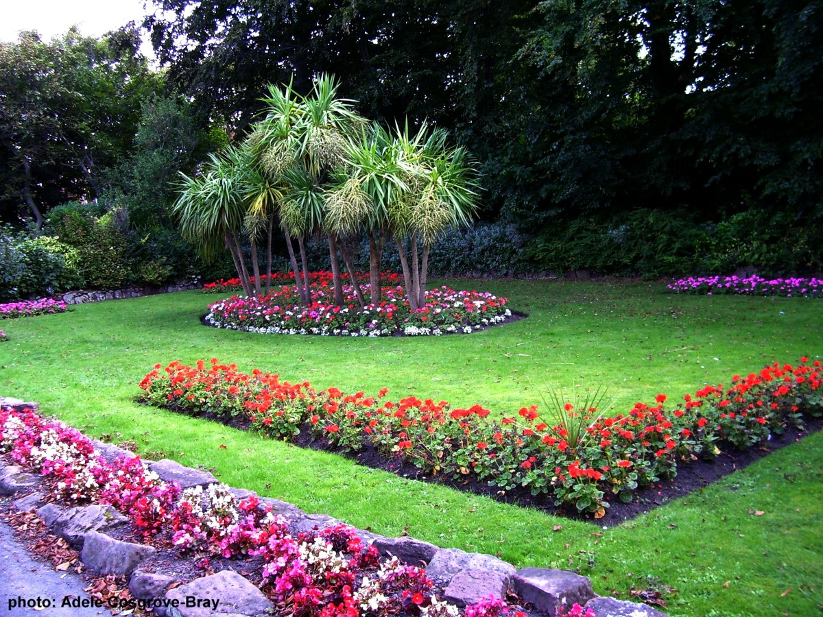 Traditional bedding plants surround palm trees.