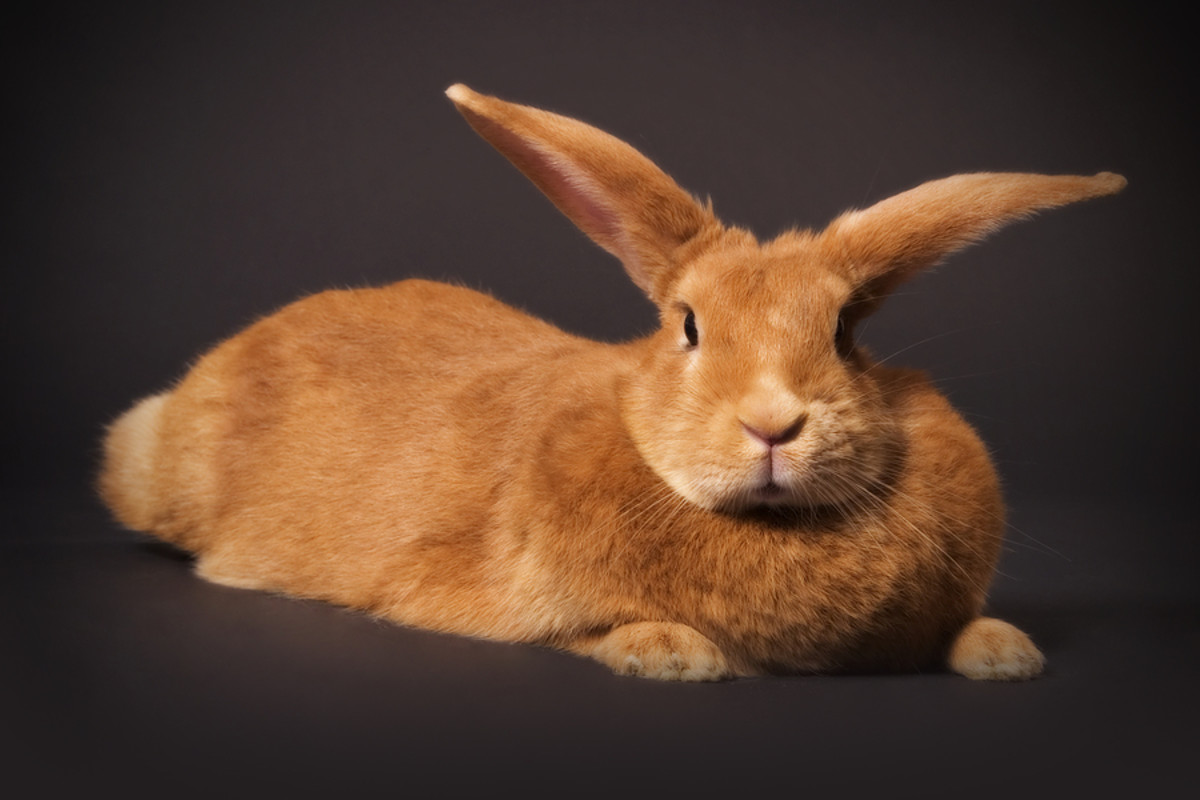 signs-that-your-pet-rabbit-may-be-sick