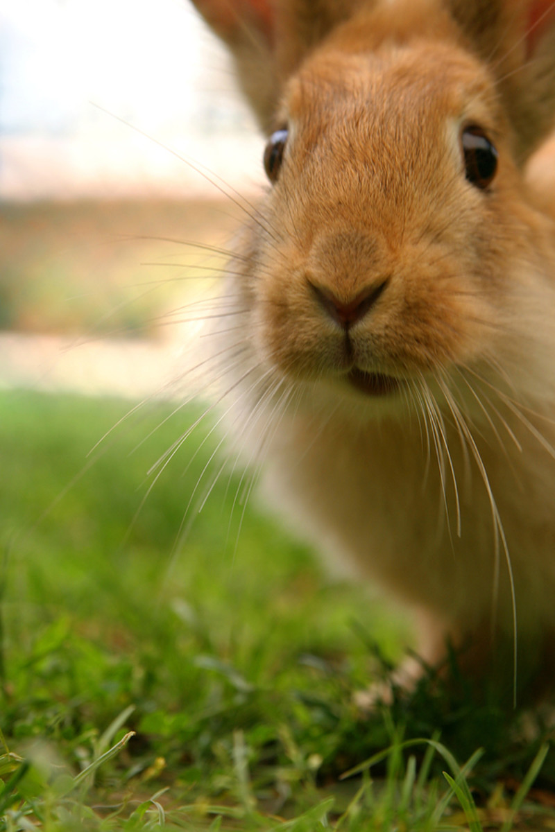 Signs that Your Pet Rabbit May Be Sick!