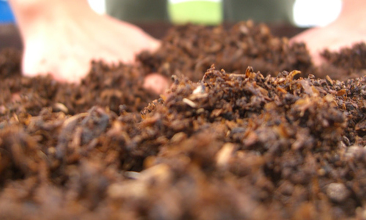 Composting worm solution for Soil Issues