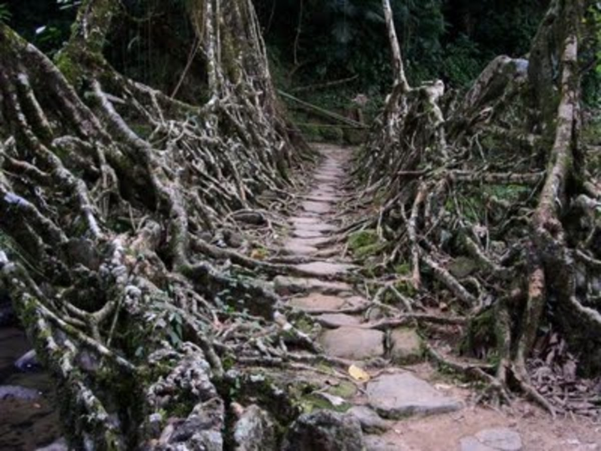 the-wettest-place-on-earth-cherrapunji-india