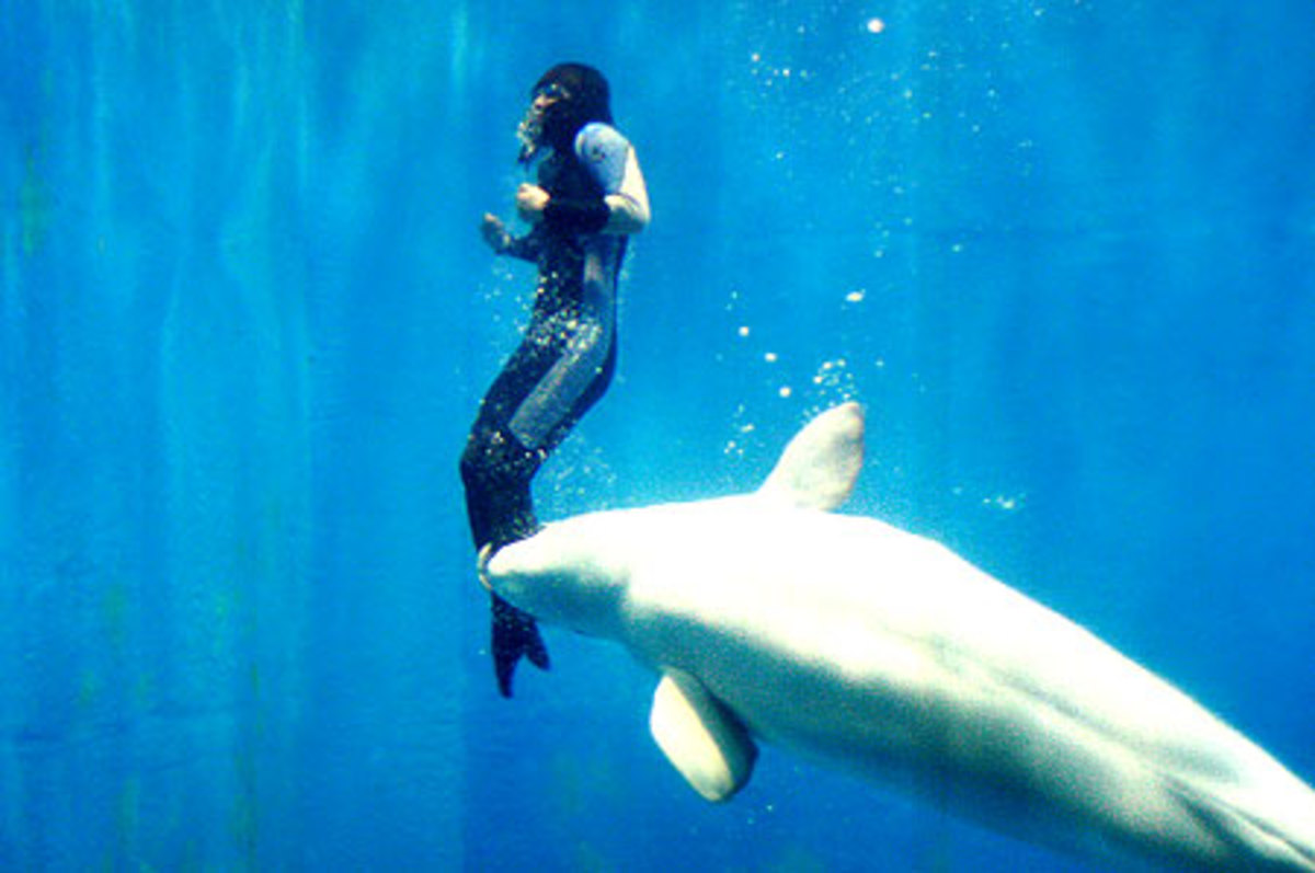 remarkable-animals-that-saved-peoples-lives