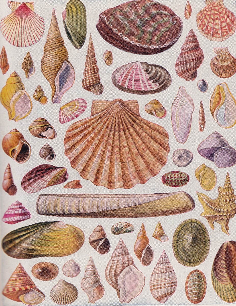 All the different kinds of shells