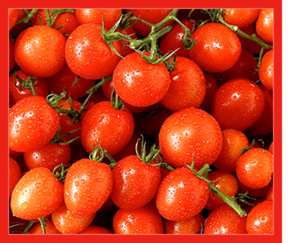 Homegrown Cherry Tomatoes Are Oh So Delicious when you grow them indoors in the middle of winter. Please post a comment below now.